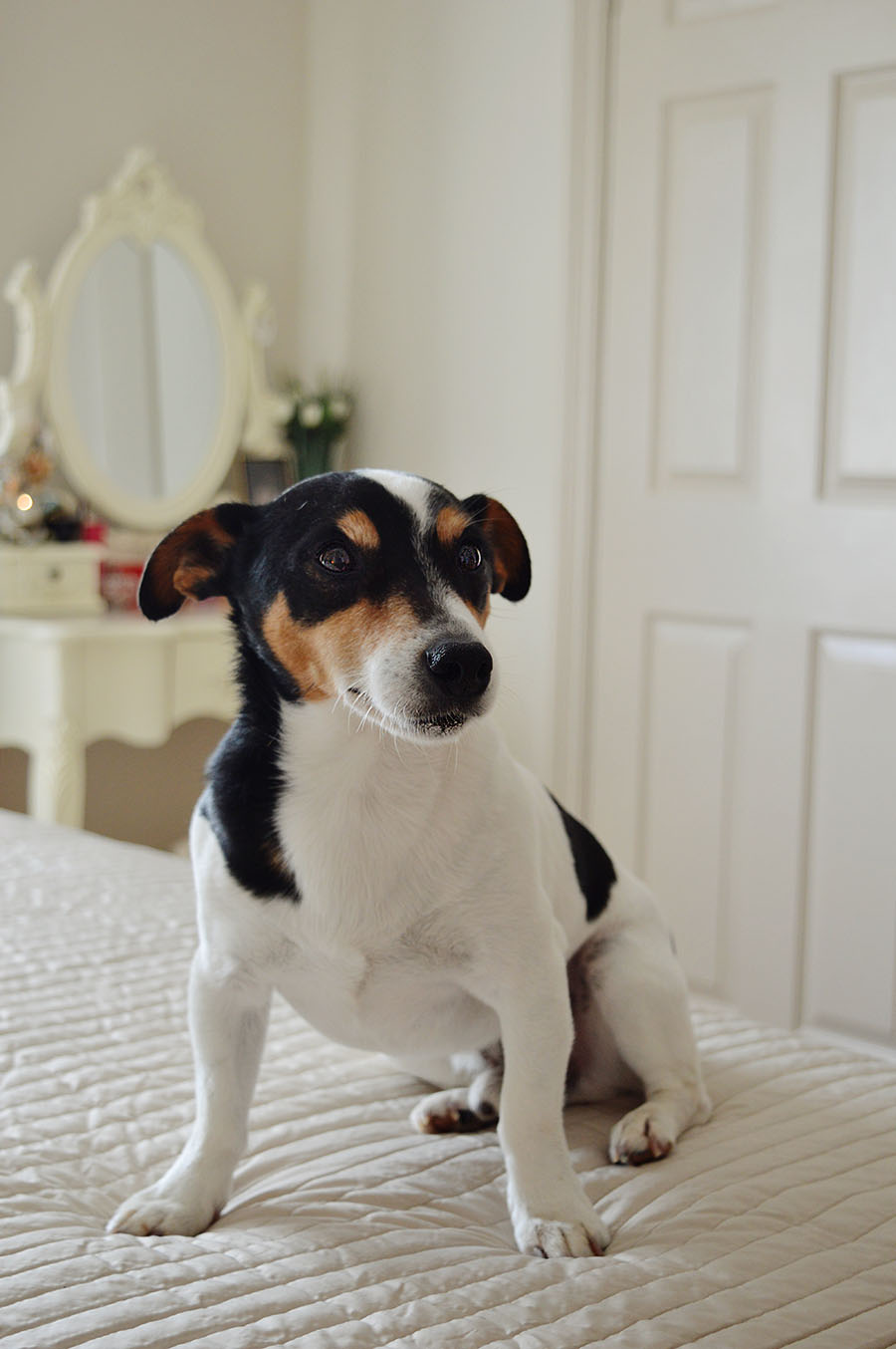 Posłanie dla psa ze szuflady DIY
