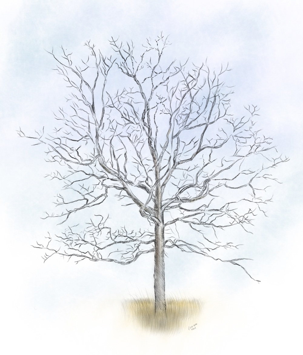 Illustration of a tree from Flat Rock Cedar Glades and Barrens