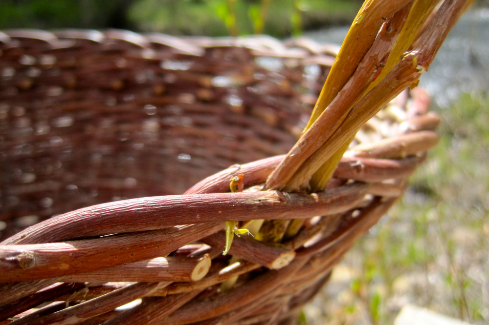 Willow basket-weaving on the river