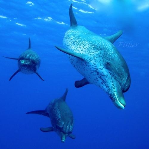 dolphinlarge500.jpg