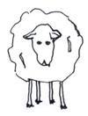 little-lamb.jpg