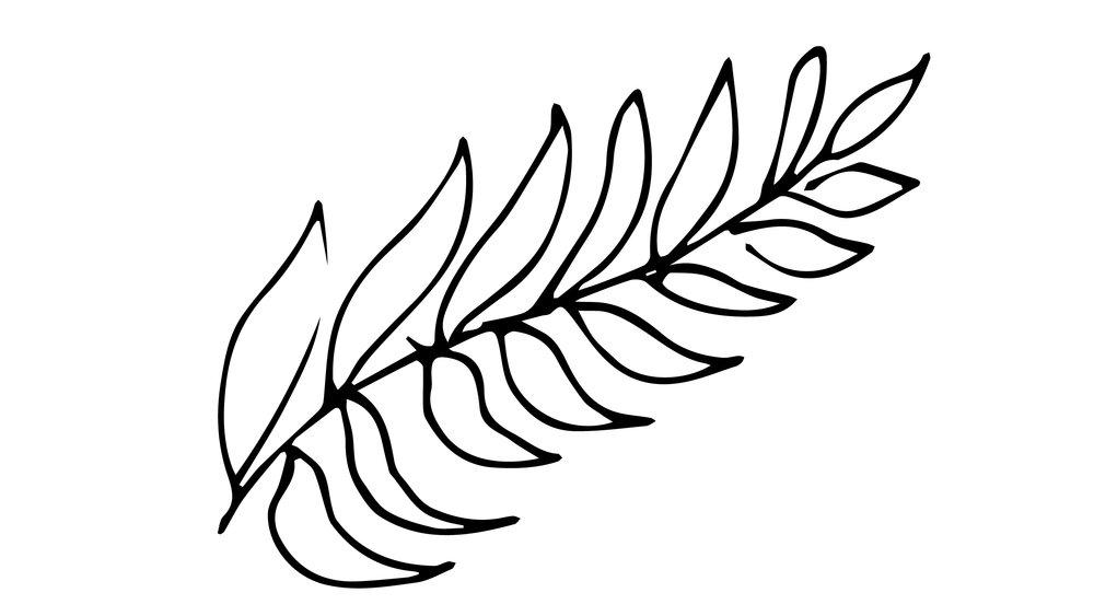 fern2.jpg
