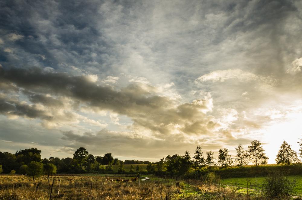 Sky over Highland Cattle-2013.jpg