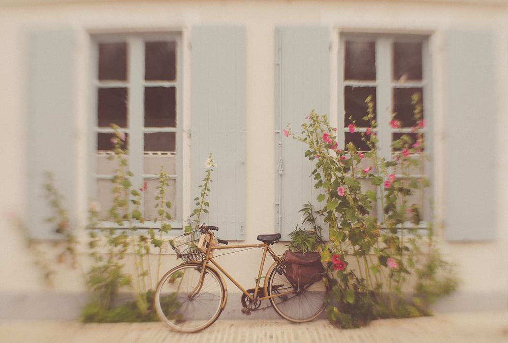 IledeRé-bikewithhollyhocks-2013.jpg