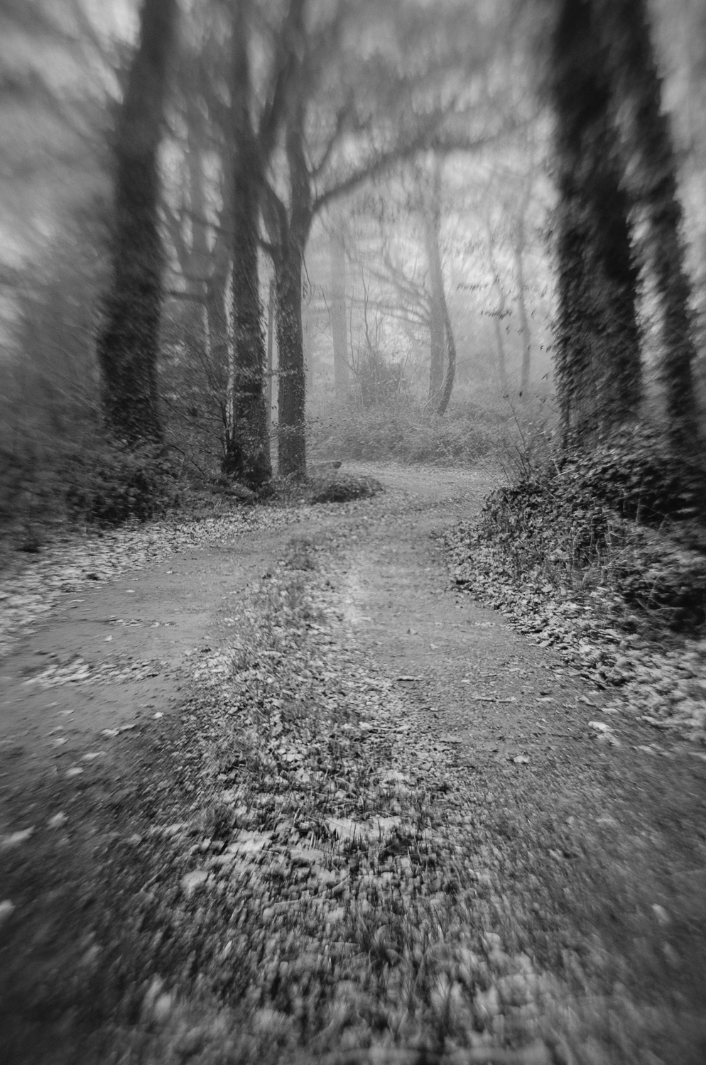 Foggy Woods-1-dec-2013.jpg