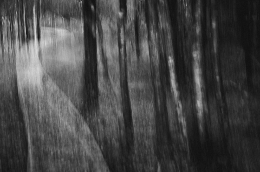 The haunted wood-B&W-2013.jpg
