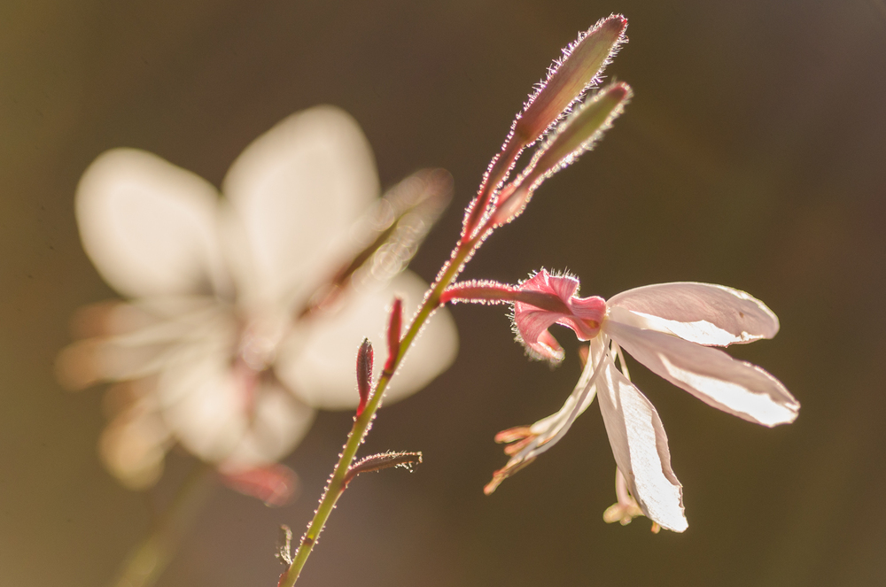 Into the light-Gaura-GEA2013.jpg