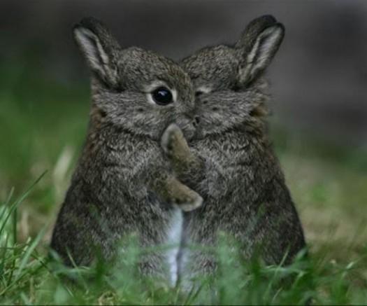 yayomg-bunnies-hugging.jpg