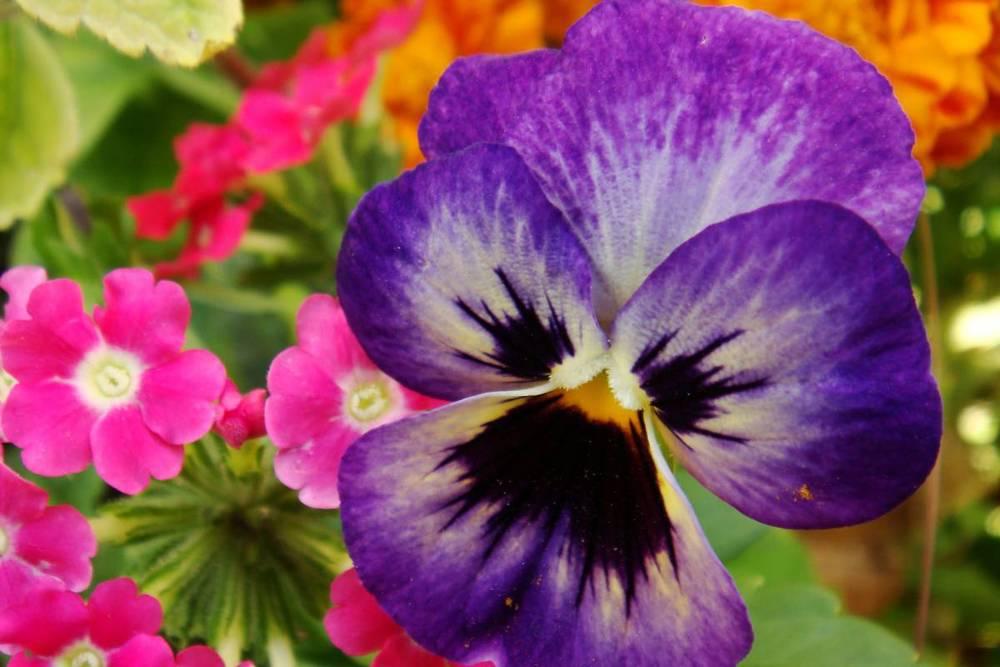 nature-q-c-1200-800-6.jpg