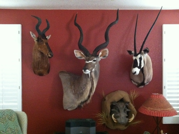 From Left To Right NbspRed Hartebeest Greater Kudu Gemsbok And Warthog