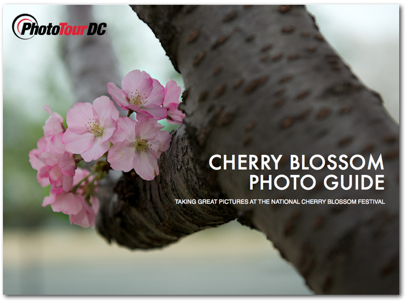 I wrote the book on photographing the Cherry Blossoms. You can download it free here.