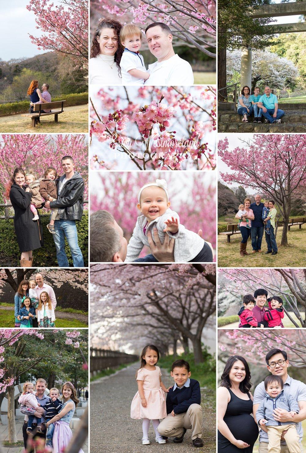 Sakura2017.jpg