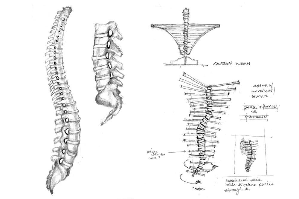 vertebraeR.jpg