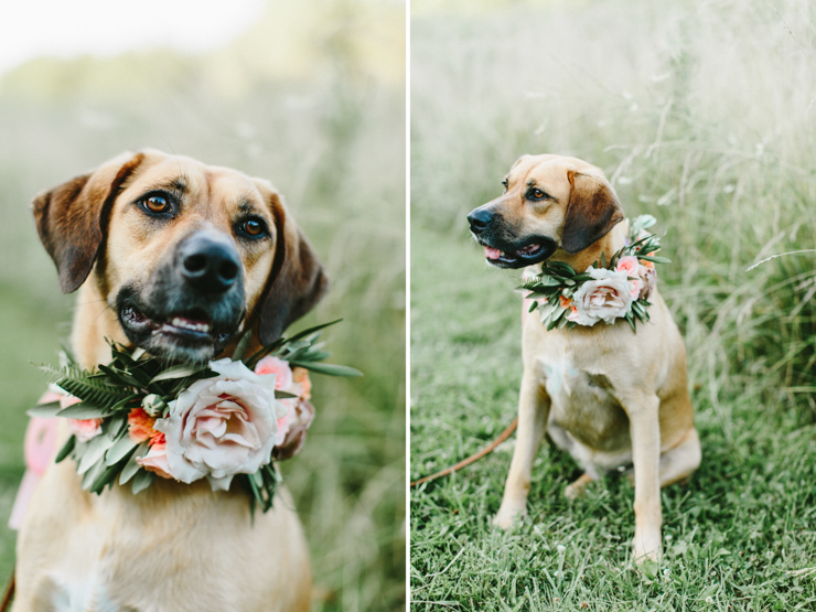 Couple brings their dog with flower crown to engagement session