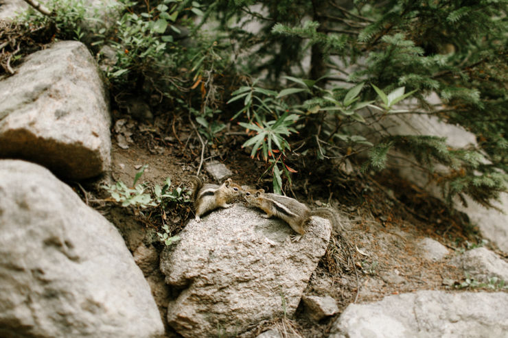 Chipmunks in Estes Park kissing