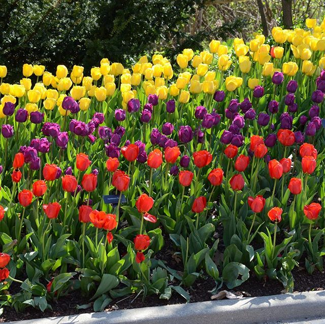 Happy first day of spring! I am looking forward to the tulips!