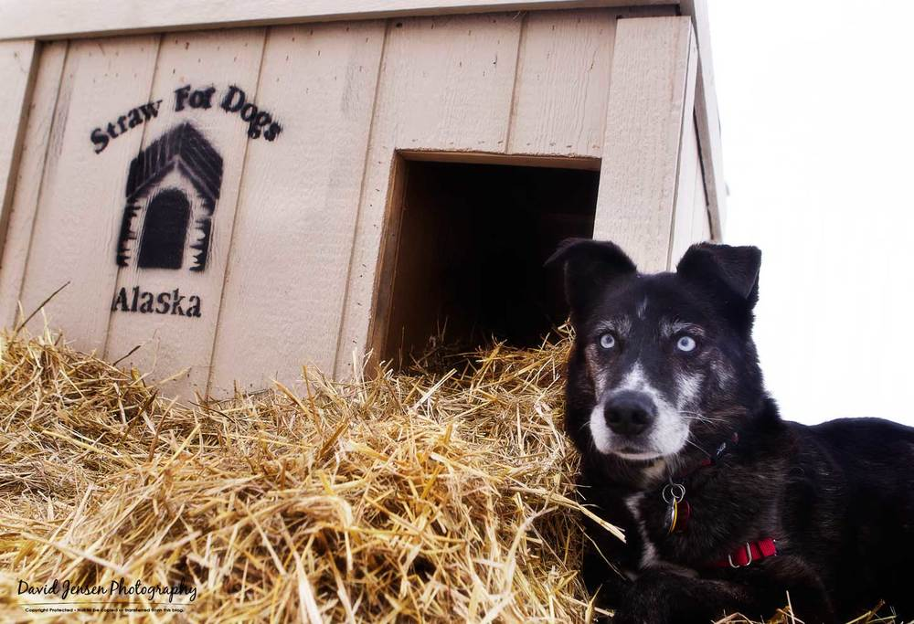 Frank poses next to one of the Straw for Dogs doghouse that is built with insulation and an arctic entry to help keep the cold out,