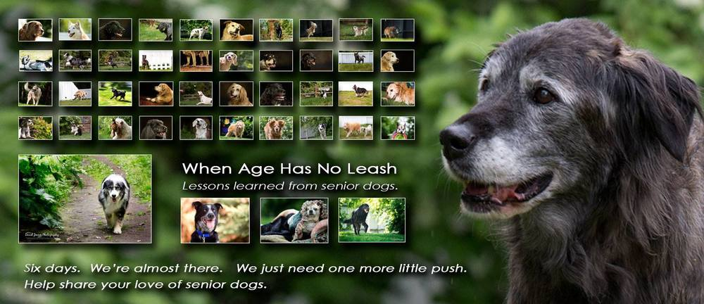 Grizzabella (R) observes 44 of the 70+ seniors featured in When Age Has No Leash