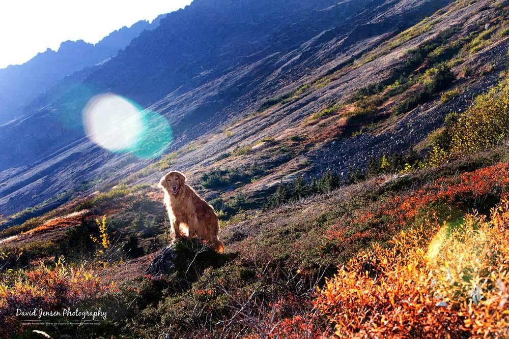LaylaFlare.jpg