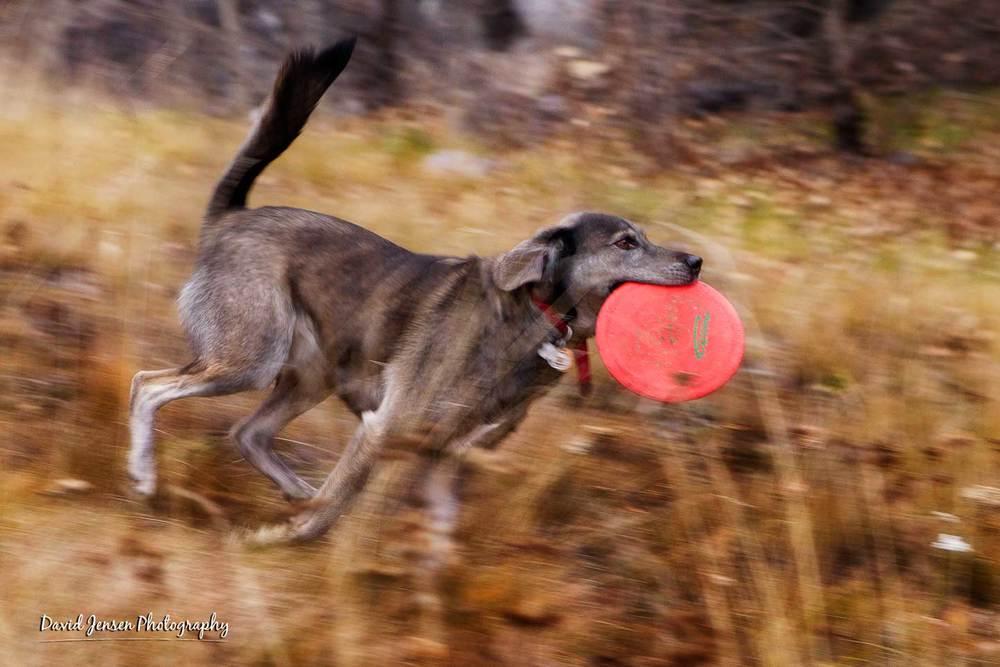 OdenFrisbee.jpg