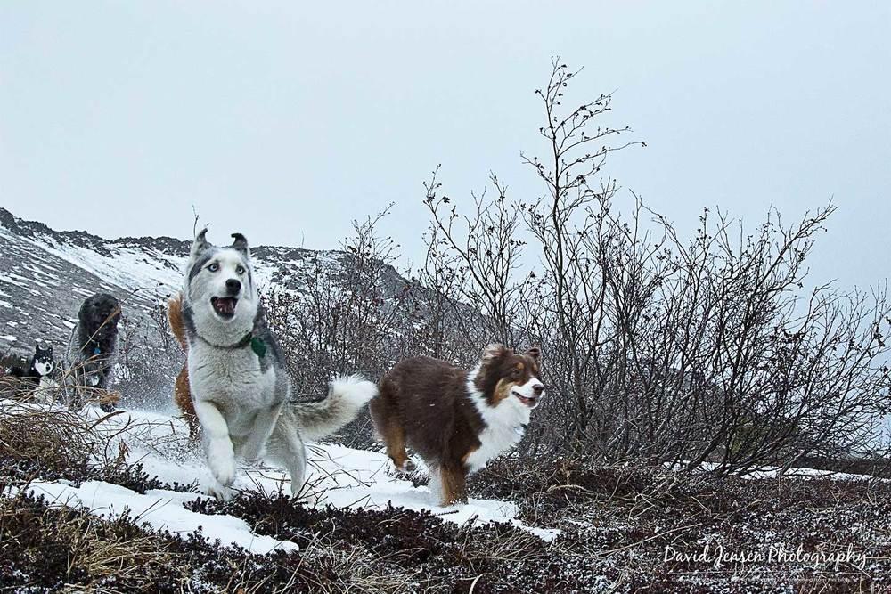 DogsRun2.jpg