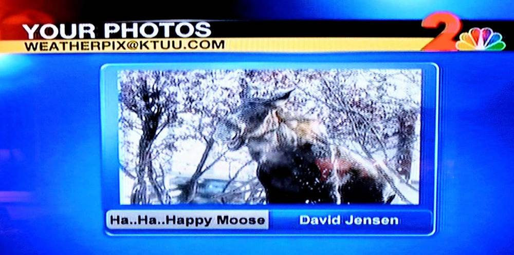 As seen on KTUU Channel 2 News.  Thank you, Jackie Purcell - our all-time favorite moose-loving Alaska Meteorologist.