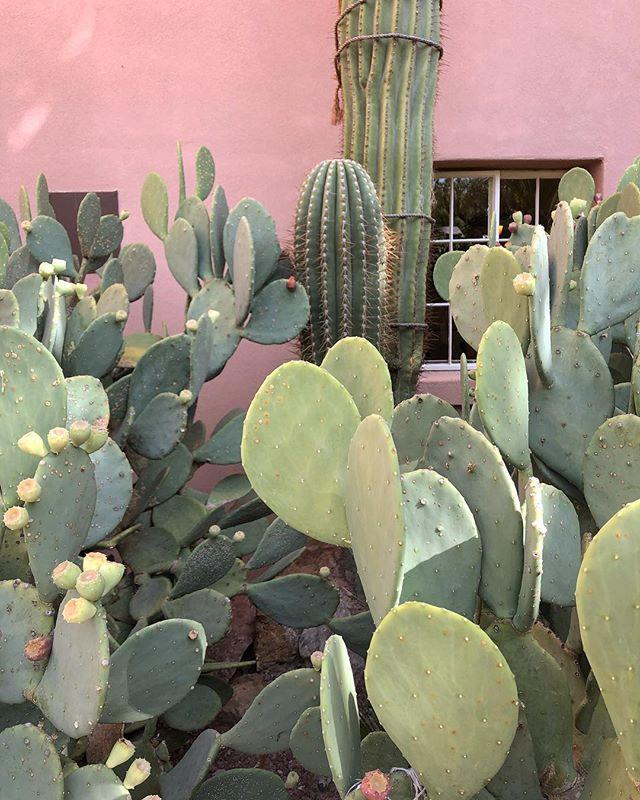 🌵#cactus #newmexico