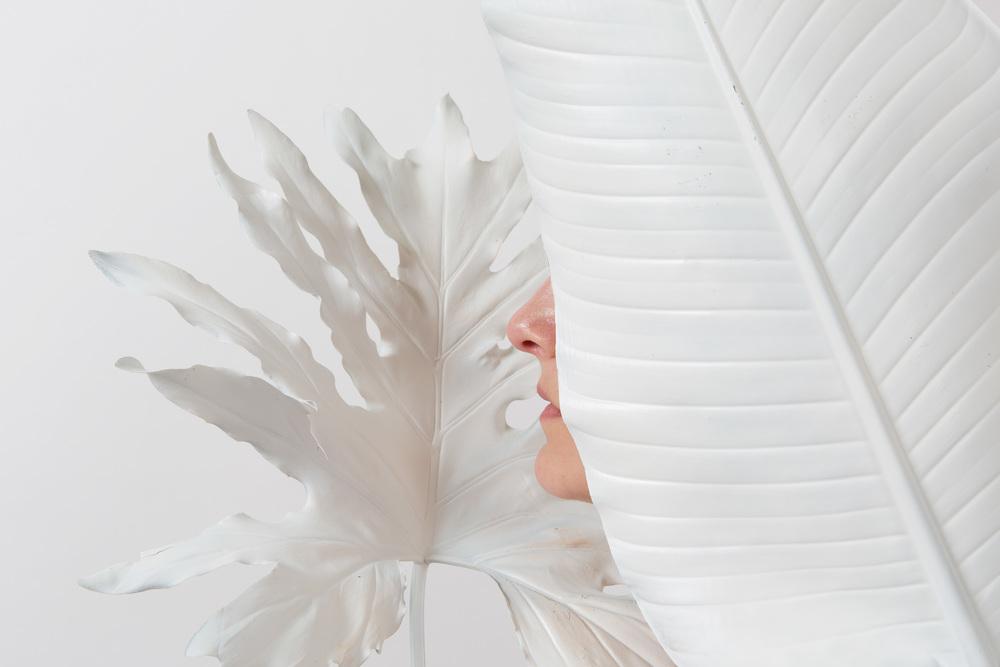 whiteplant.JPG