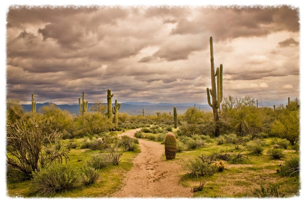 Desert Path.JPG
