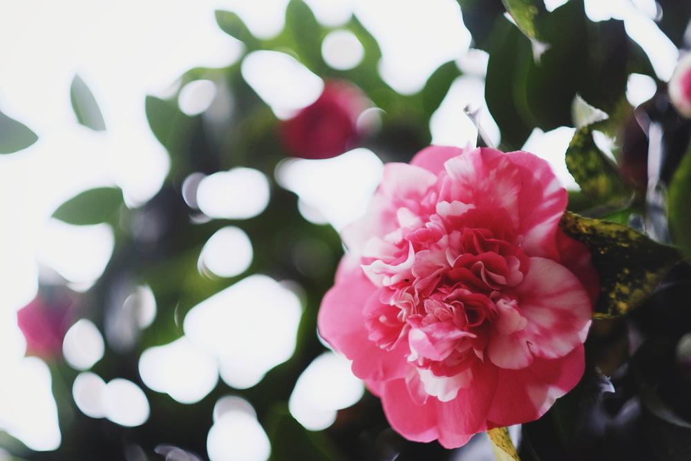 47. February Bloom