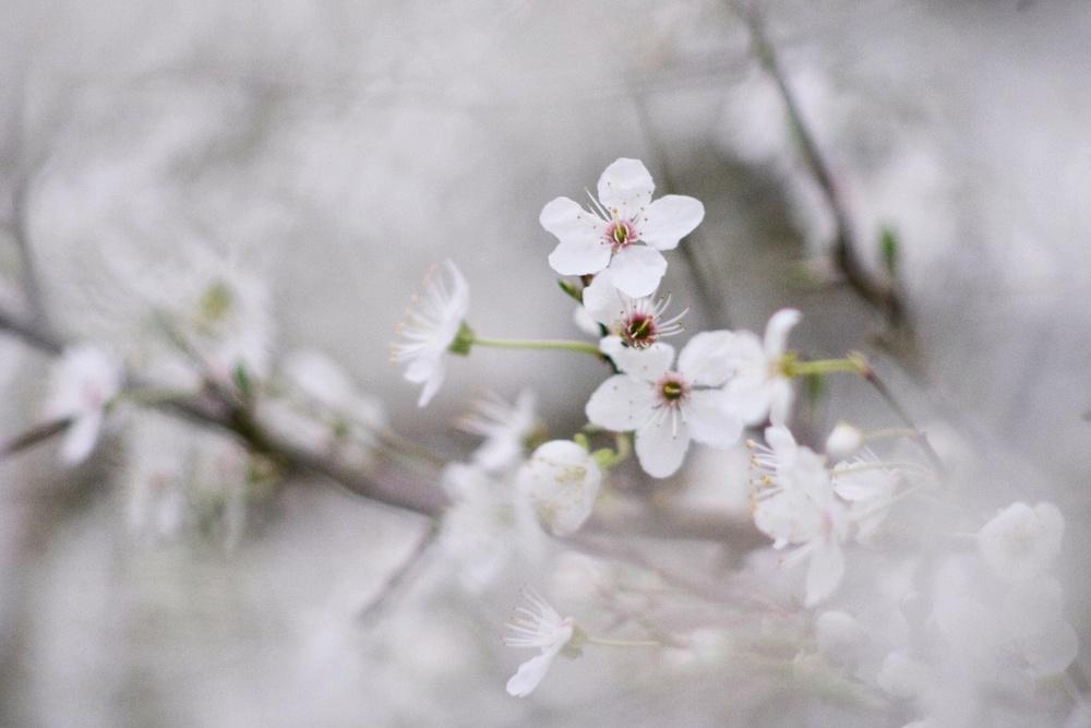 66. Blossom