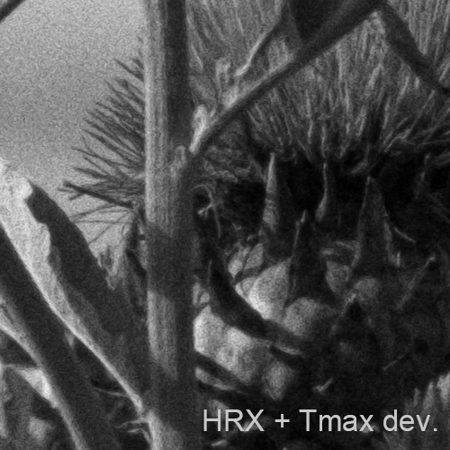 100% crop. HRX + Tmax dev.