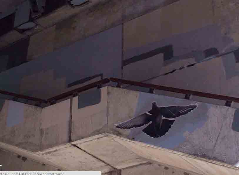 pigeon up copy.jpg