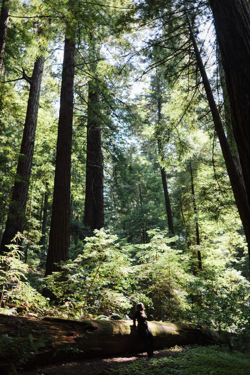 LCrew_Redwoods_0007.jpg