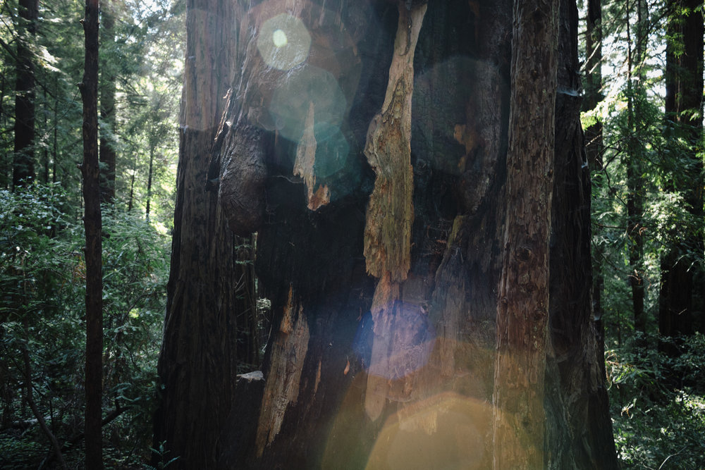 LCrew_Redwoods_0026.jpg