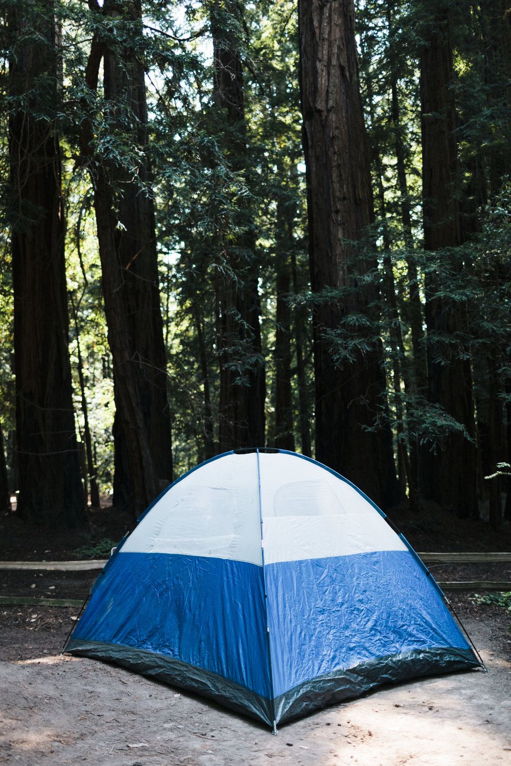 LCrew_Redwoods_0002.jpg