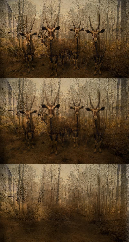 The Disappearance I,II,III (Triptych)