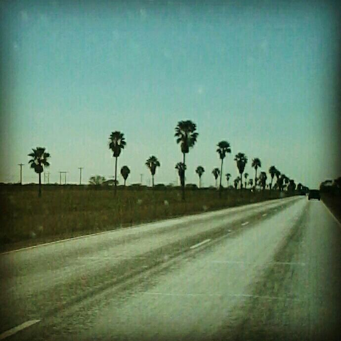 I'm a Rio Grande Valley Native. - Palm trees and citrus groves are home.