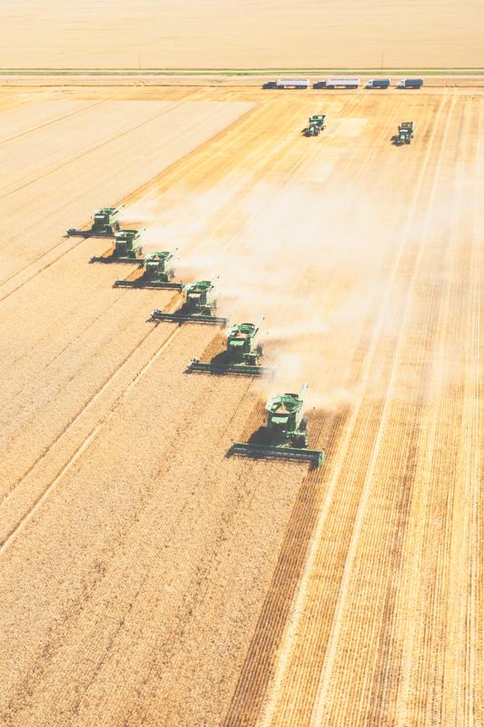 Aerial-Combine-Harvest-Altona-Manitoba-10.jpg