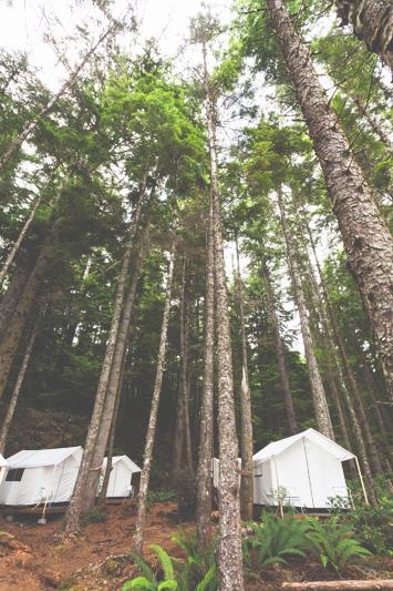 Orca-Camp-Wild-Coast-Adventures-British-Columbia-2-2.jpg