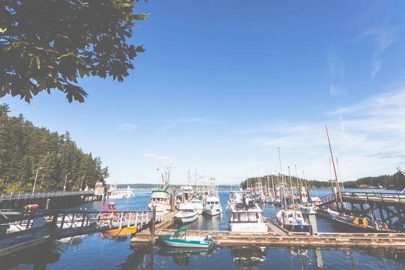 Orca-Camp-Wild-Coast-Adventures-British-Columbia-6.jpg