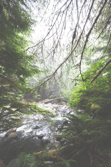 Orca-Camp-Wild-Coast-Adventures-British-Columbia-9-2.jpg