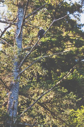 Orca-Camp-Wild-Coast-Adventures-British-Columbia-10-2.jpg