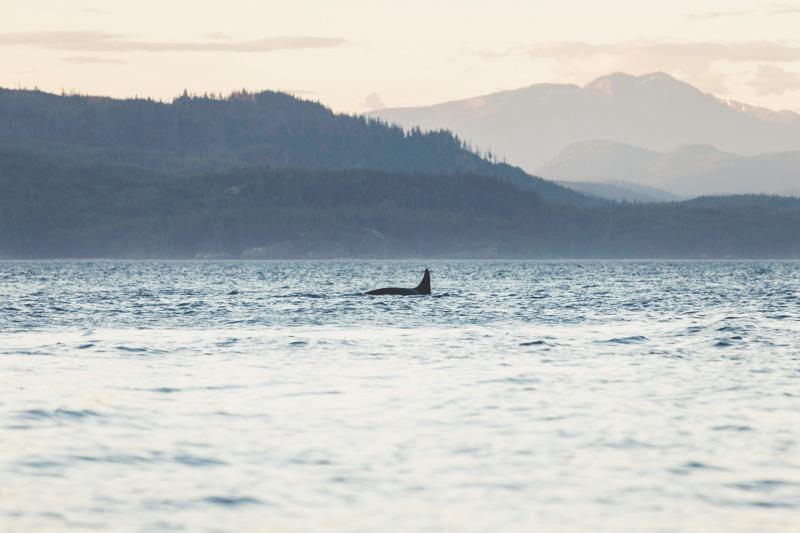 Orca-Camp-Wild-Coast-Adventures-British-Columbia-23.jpg