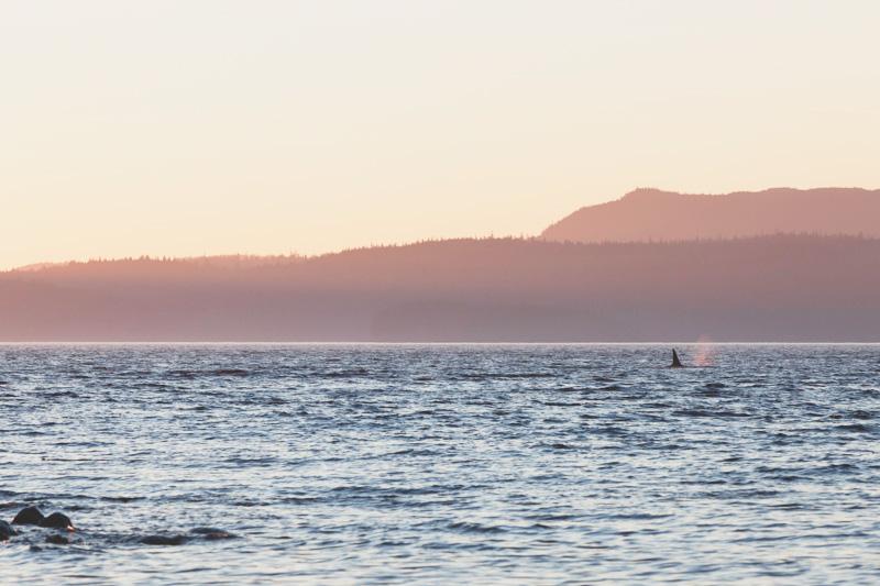 Orca-Camp-Wild-Coast-Adventures-British-Columbia-27.jpg