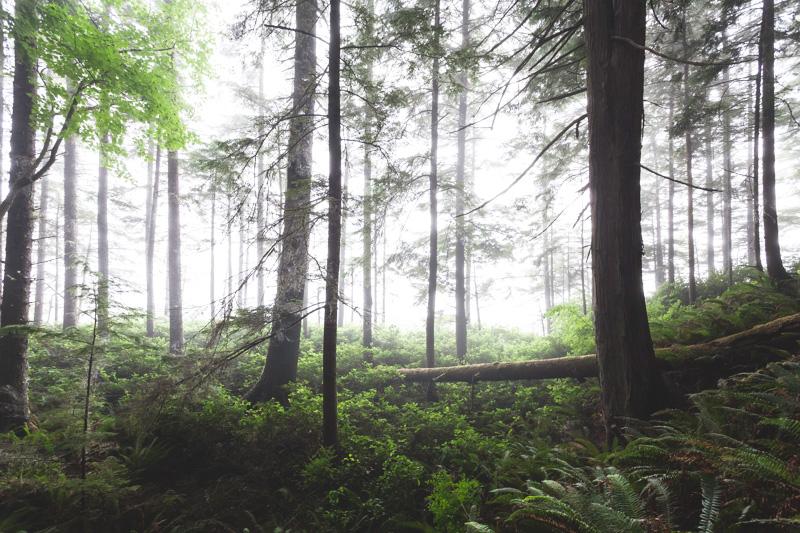 Orca-Camp-Wild-Coast-Adventures-British-Columbia-35.jpg