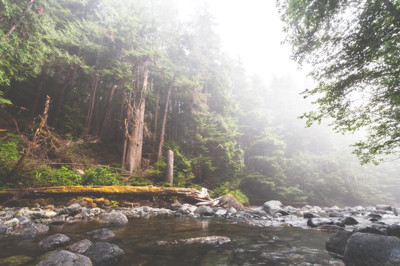 Orca-Camp-Wild-Coast-Adventures-British-Columbia-42.jpg
