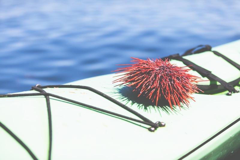 Orca-Camp-Wild-Coast-Adventures-British-Columbia-49.jpg