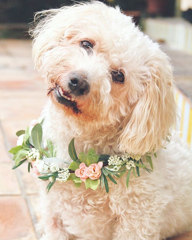 I have new flower crowns in the shop..... But, more importantly, I now have DOG FLOWER COLLARS! 🌸🐶🌸