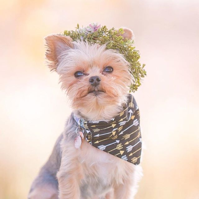 Omgggggg. Loved working on this custom order doggie crown!!!! 🍃🐶🍃🐶🍃 #doglife
